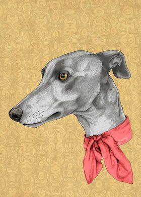 Greyhound with scarf
