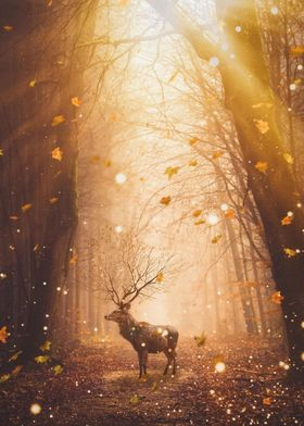 Morning Magic Deer