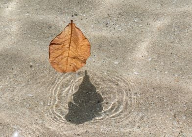 leaf on clear water