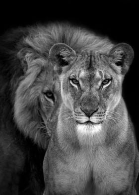Lions Love black and white