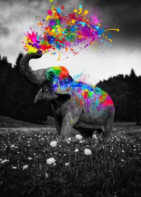 Elephant Color Splash