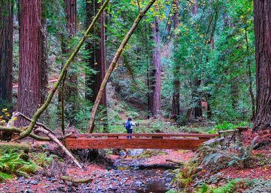 Hiker in Redwood Forest