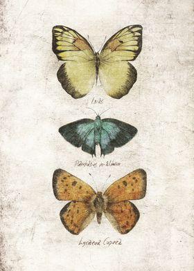 Butterflies V
