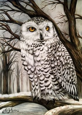 Snowy Owl In The Woods