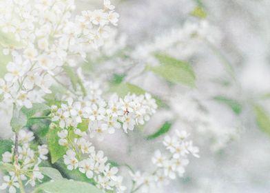 white fairytale 3