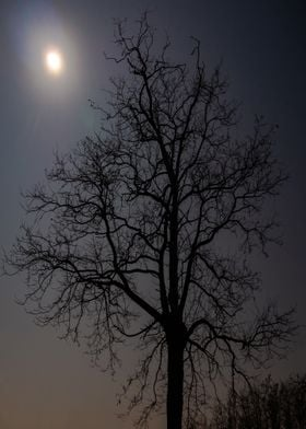 Lone tree in the Moonlight