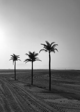 Tree Palms and Sands