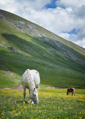 Into Little Tibet