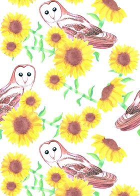 Barn owls and sunflowers