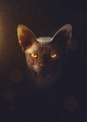 The Sphynx Cat right one