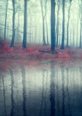 Forest of Illusions