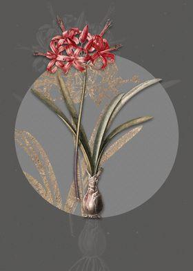 Vintage Guernsey Lily