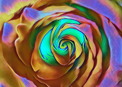 colorfull rose