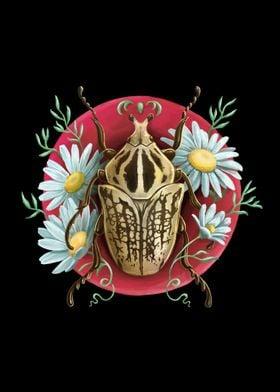 Goliat Beetle
