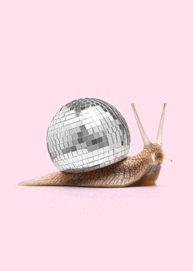 Disco Snail