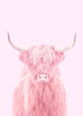 Pink Highland Cow