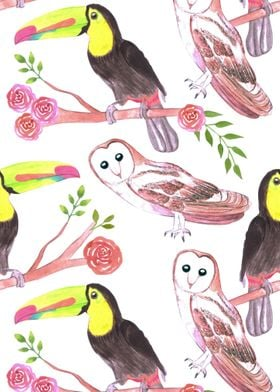 toucans barn owls flowers