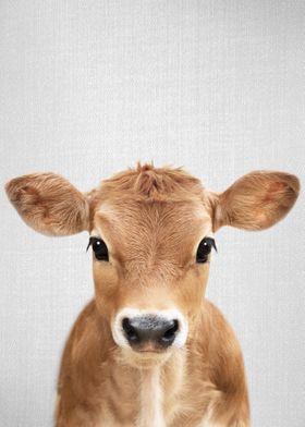 Calf Colorful