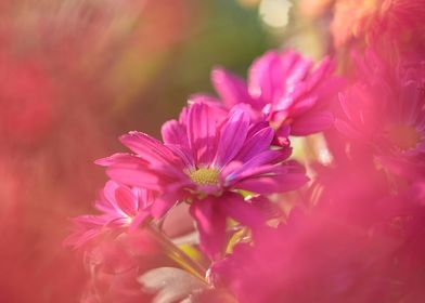 Beautiful floral flower