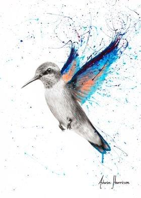Azul Hummingbird