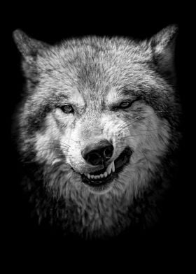 Wild angry black wolf face