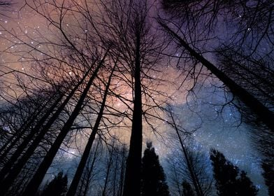 Cosmic tree forest
