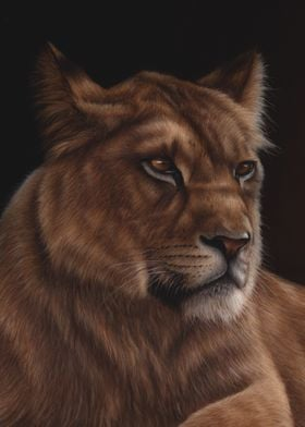 Solitary Lioness