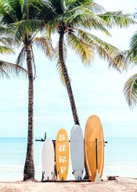 Choose Your Surfboard