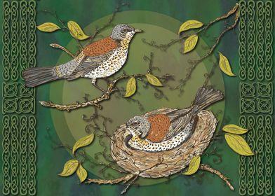 Nesting Birds Fieldfares