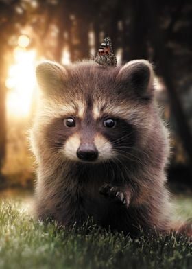 The Raccoon and Butterfly
