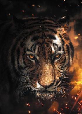 Sparkling Tiger
