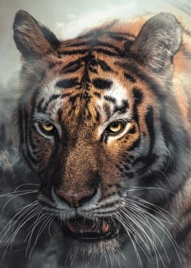 Misty Tiger Portrait
