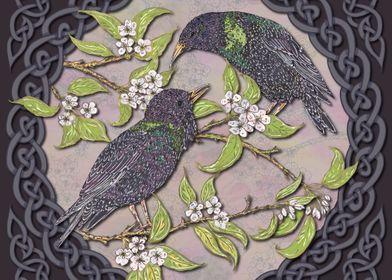 Celtic Starlings