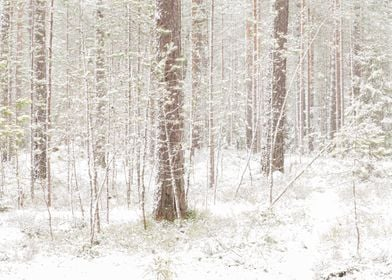 The First Snow No6