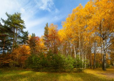 The Autumn View