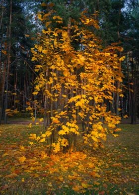 The Autumn Fire