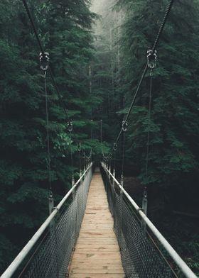 Suspension Bridge Forest