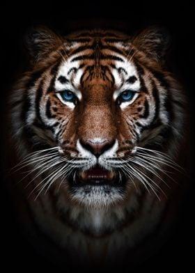 wild tiger head poster