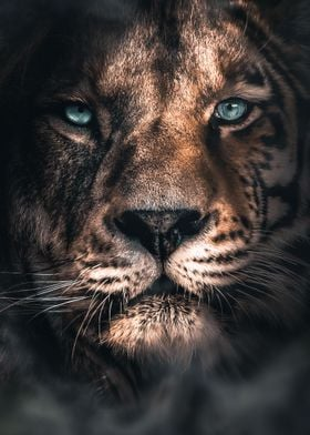 The Lion Tiger
