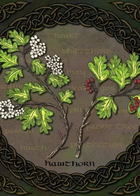 Celtic Hawthorn