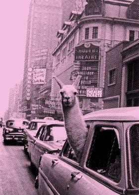 lama in taxi pink variant