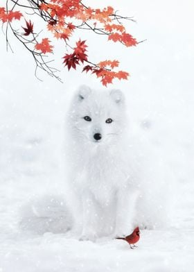 White Fox and Red Cardinal
