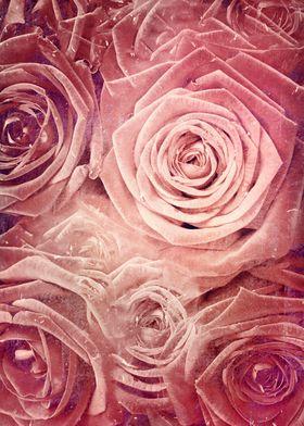 Distressed Roses