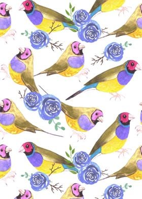 Gouldian finches and roses