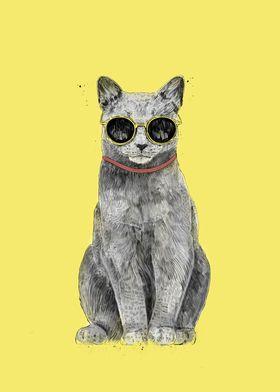 Summer Cat