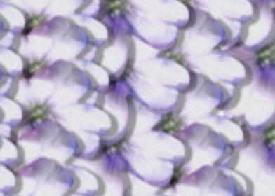 flow of flowers