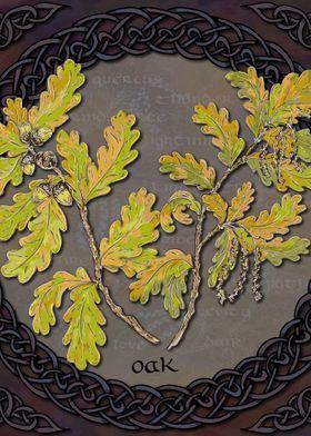 Celtic Oak