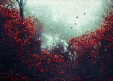 barrier enchanted woodland