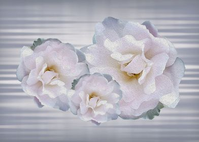 Pink gray roses