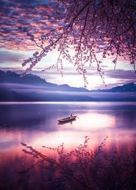 Reflection Japanese Cherry